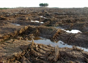 Clearcutting in Nova Scotia on the increase?