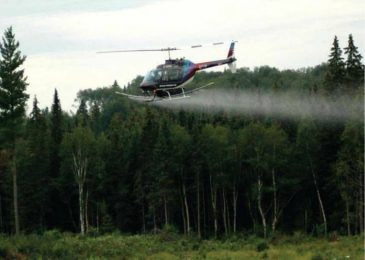 Glyphosate spraying and wild foods: a letter to Minister Mark Furey