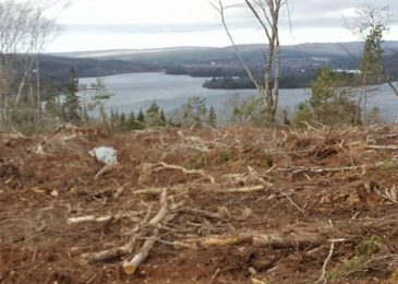 Pictorial: Nothing new here – A clearcut at Eden Lake, Pictou County, Nova Scotia