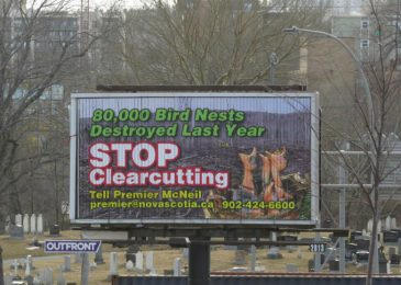 Three anti–clearcut billboards in Halifax, Nova Scotia