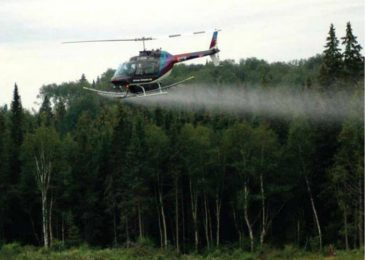 Glyphosate spraying resumes in Nova Scotia forests