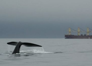 Training and qualification requirements are vague for Nova Scotia's offshore  wildlife observers during seismic surveys