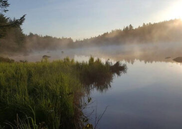 News brief: Wilderness designation of unique ecological area near Halifax reaches critical stage