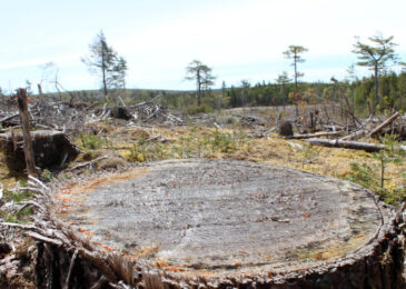 All hail the woods: How and when forests store carbon