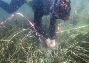 Nova Scotia's secret treasure: Vital eelgrass ecosystem threatened by proposed Owls Head golf course