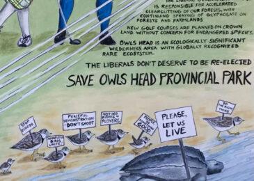 Editorial cartoon: Whack-an-owl